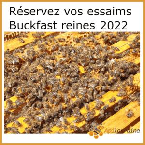 Essaims d'abeille de l'année 2022