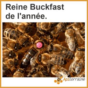 Reine d'abeille de l'année